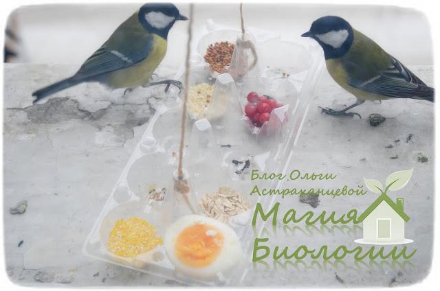 наблюдение-птиц-на-кормушках-магия-биологии-эксперимент-синицы