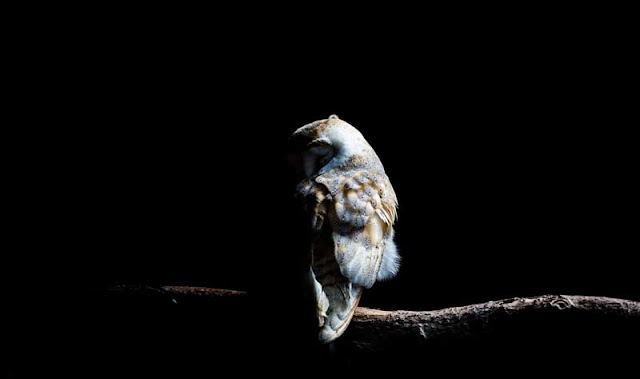burung hantu kuntilanak