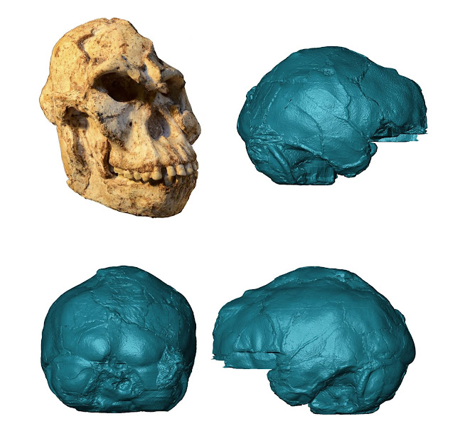 Peering into Little Foot's 3.67-million-year-old brain