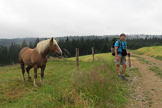 Pastwiska przed wsią Zielone Ludowe.