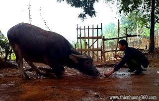 Xin đừng giết hại động vật: Cứu vật vật trả ơn, Định sanh trí tuệ