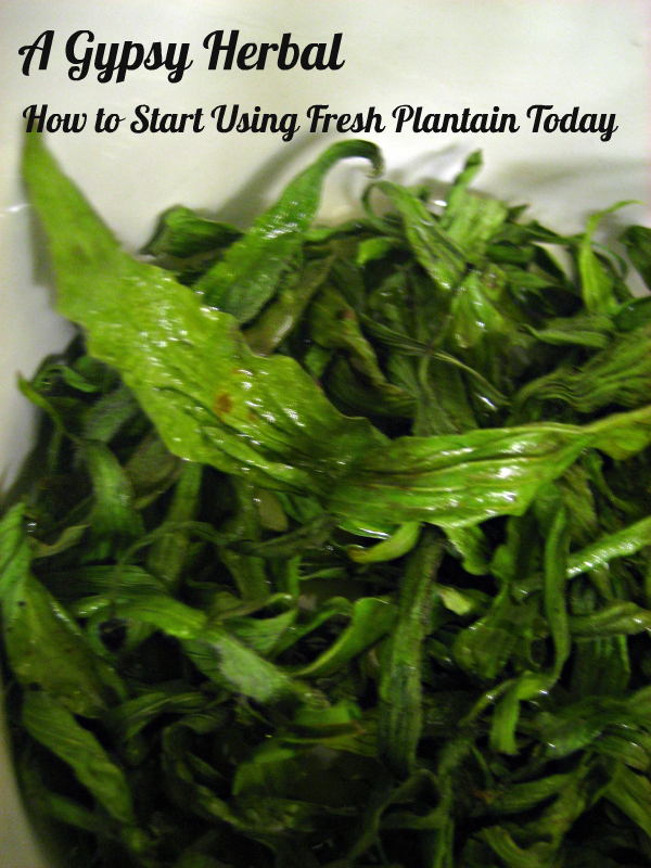 How to Start Using Fresh Plantain Today