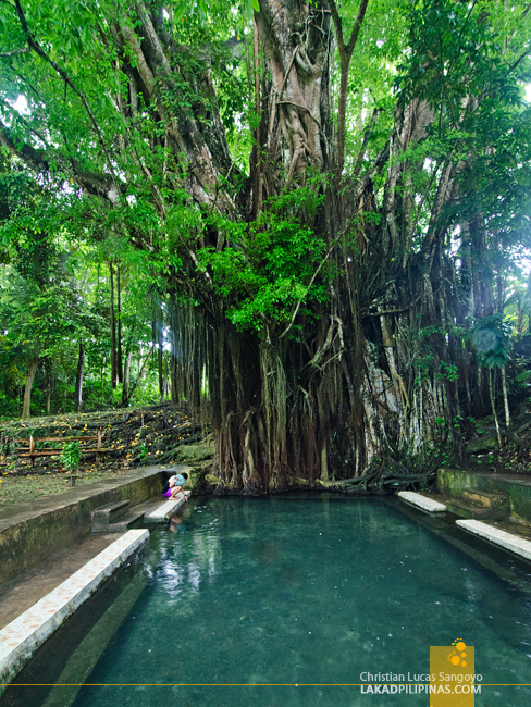 Siquijor Balete Tree