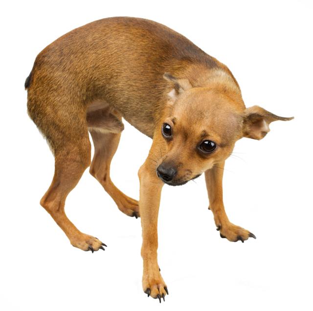 Macht BARF Hunde aggressiv