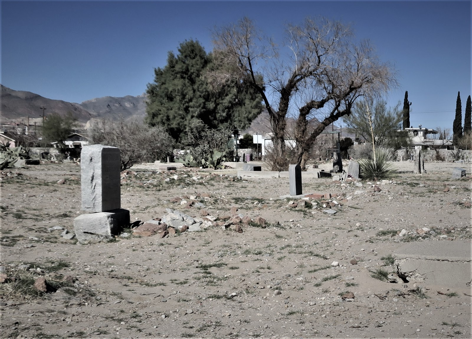 Living Rootless: El Paso 2019: A Cemetery     Prairie Dog?
