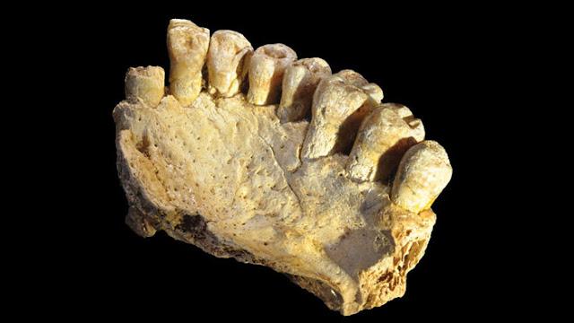 Fóssil encontrado sugere que nossa espécie deixou a África 40 mil anos antes do esperado