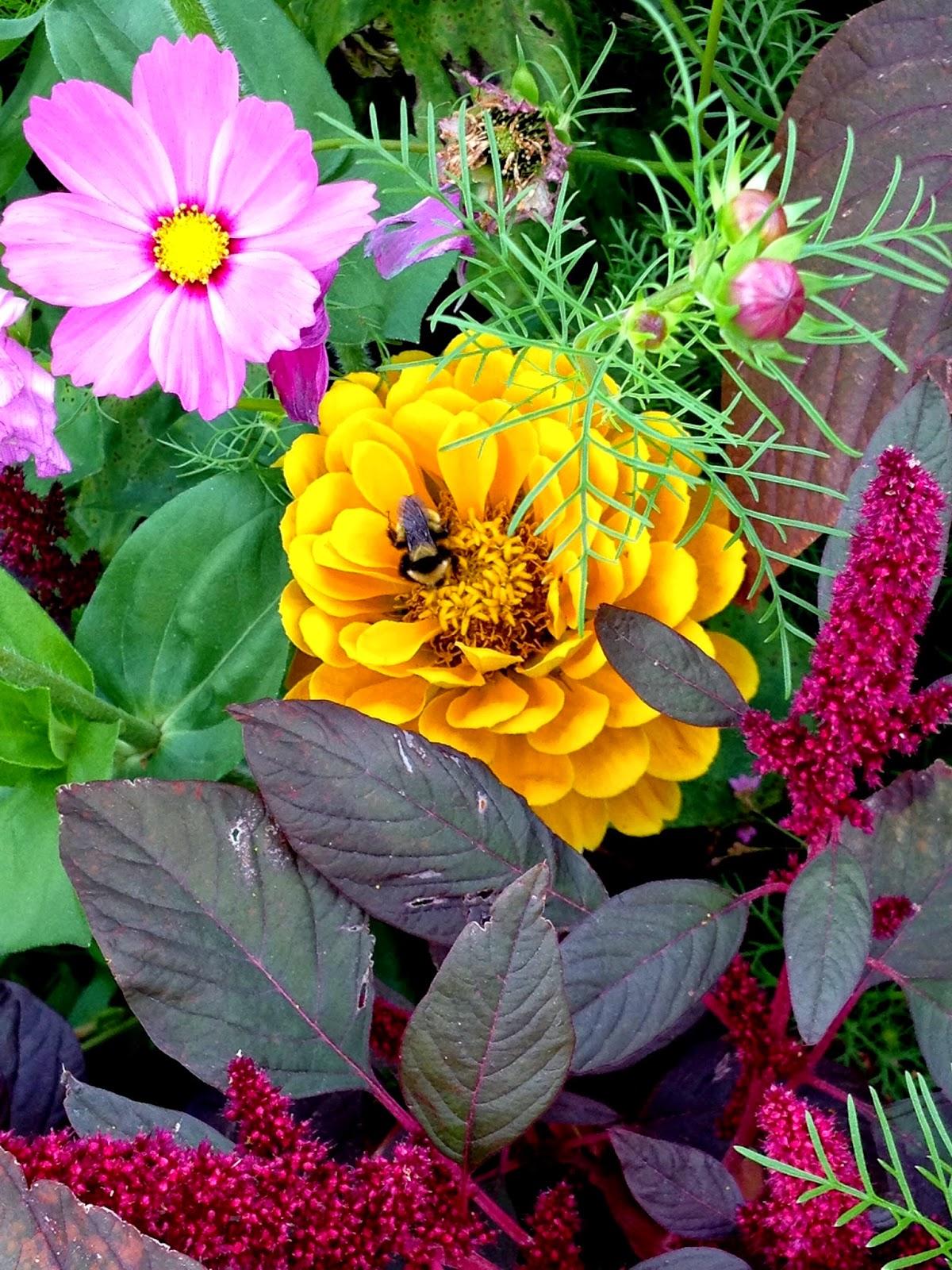 Tilly's Nest: Honeybees vs. Bumblebees: Spotting the ... - photo#30