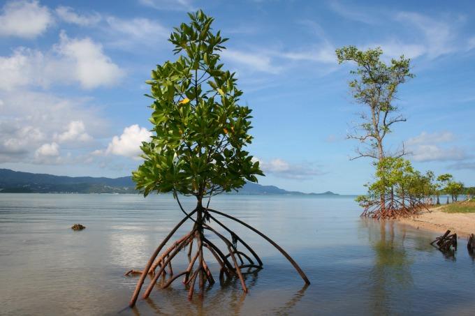 Plai Laem beach Koh Samui