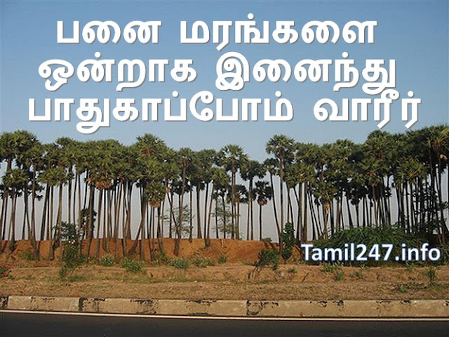 பனைகள் கோடி Whatsapp groups, panai maram valarkka, palm tree plantation tips and ideas, whatsapp group for palm tree, marangalai kappom, maram, panai maram valarpu, panai maram cultivation