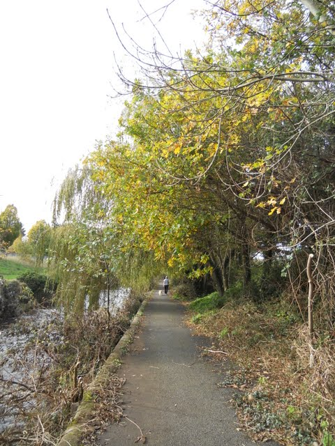 Walk the River Dodder in Dublin - footpath