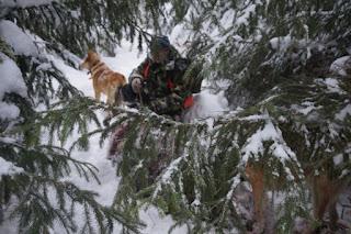 Охотничьи собаки в зимнем лесу
