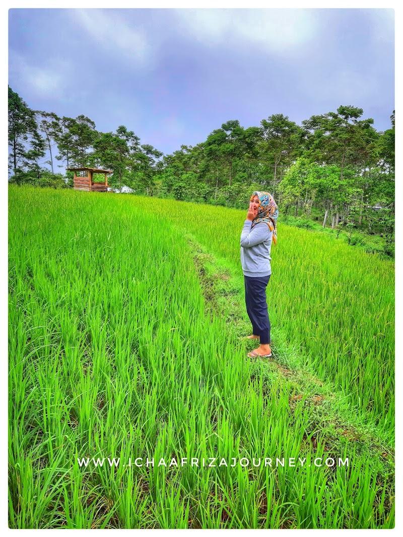 Traveling : Pesona Kawasan Dataran Tinggi Malino Sulawesi Selatan