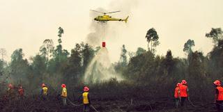 Curigai Dua Perusahaan Pembakar Lahan dan Hutan Di Riau Polisi Lakukan Penyelidikan - Commando