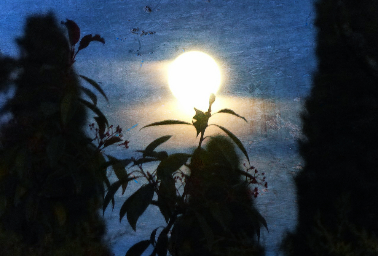 Zaz zetoun mind lune le 26 octobre 2015 for Jardin lune octobre 2015