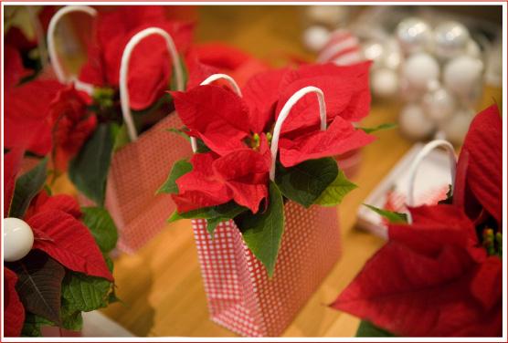 Stella Di Natale In Casa.Come Curare La Stella Di Natale Pianta In Casa Perfect Cura La