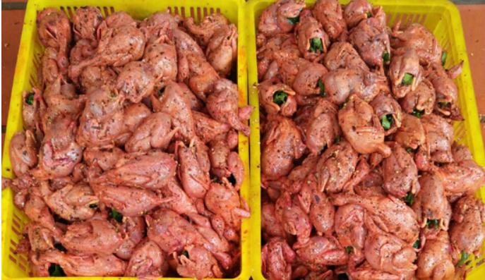 Địa chỉ cung cấp sỉ lẻ chim cút thịt chất lượng cao tại Miền Bắc, Miền Trung