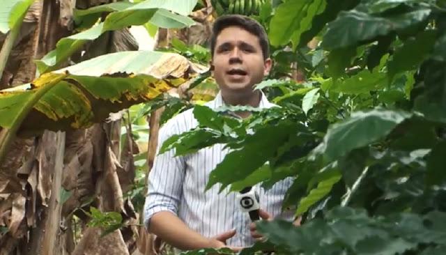 Produção de banana em Barra do Choça é destaque na Bahia