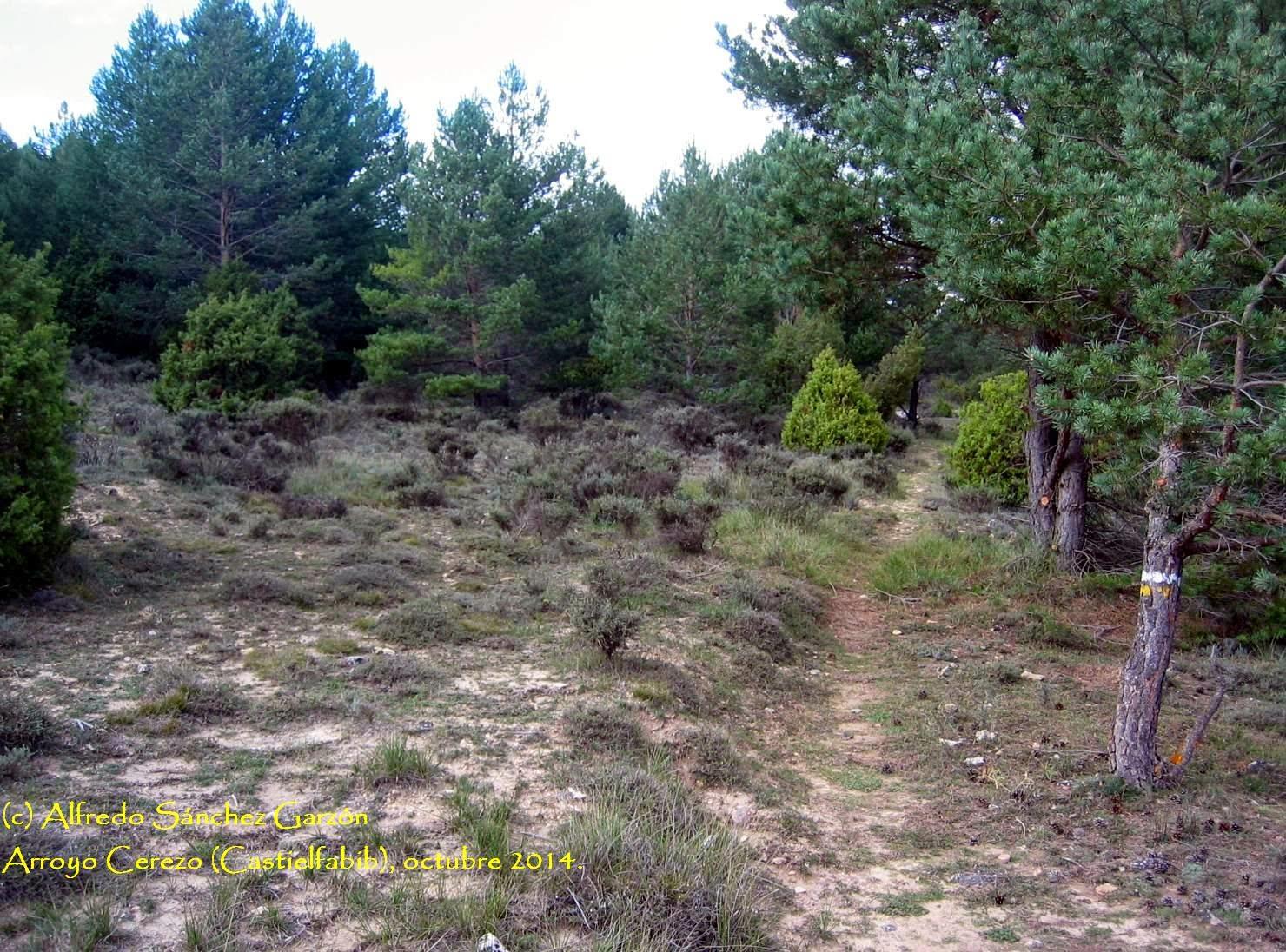 arroyo-cerezo-castielfabib-tres-reinos