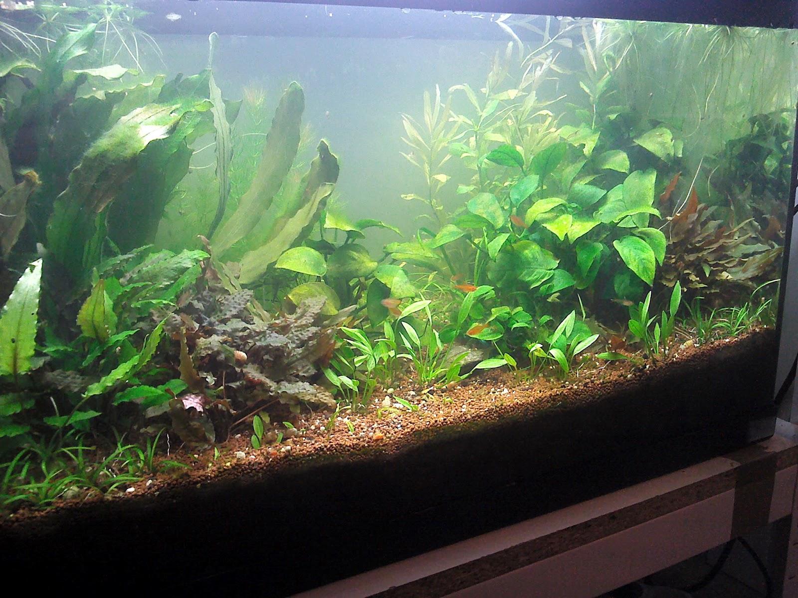 ; Naturel Planté Neons CieAquarium Eclairage Les Et Tubes Ok0nPw