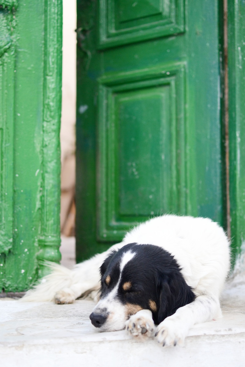 MYKONOS greece travel guide vancouver travel blogger Covet and Acquire cute sleeping dog