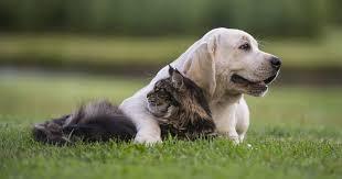 cica-kutya barátság