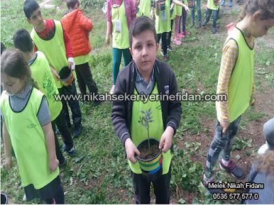 İzmir Buca Vali Rahmi Bey ilkokulu Fidanları 3