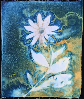 Wet Cyanotype_Sue Reno_Image 70