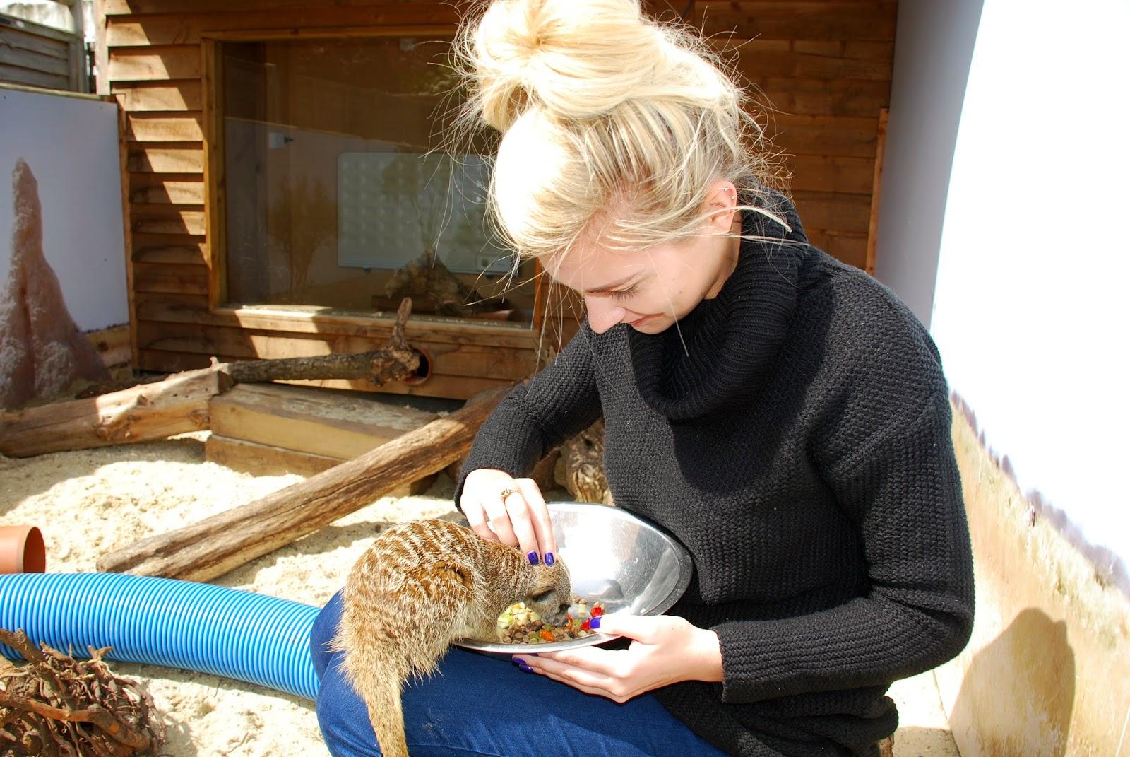Feeding the Meerkat at Paradise Wildlife Park
