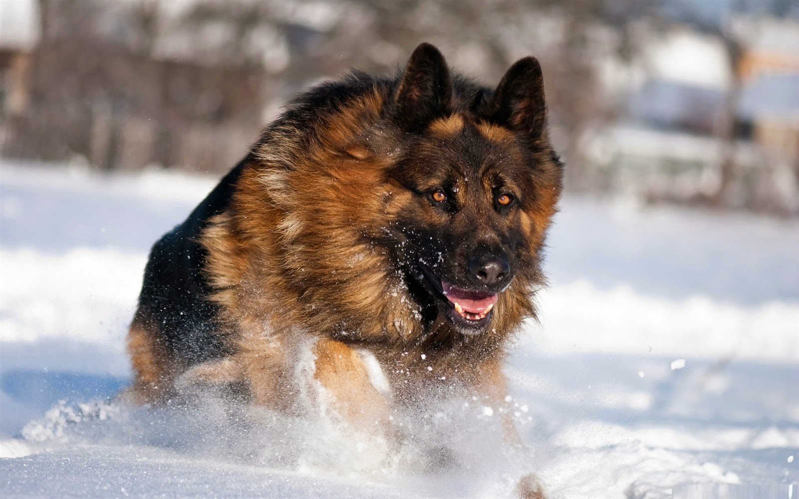 Winter Activities That Are Fun for Your Dog