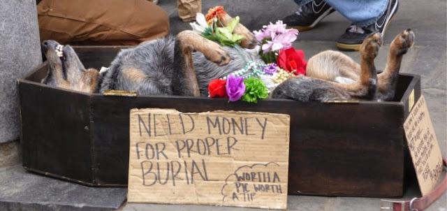 Conoce al perro que finge su muerte ¡para pedir limosna!