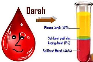 Mengenal Komponen, Bentuk Dan Gangguan Pada Darah