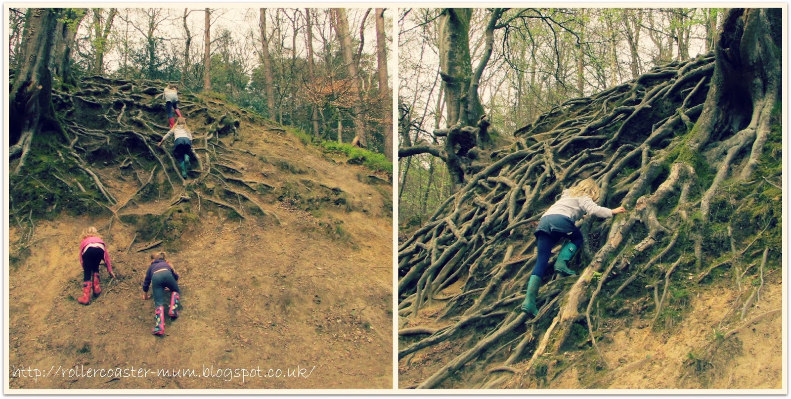 Tree root climbing frame at National Trust Waggoners Wells