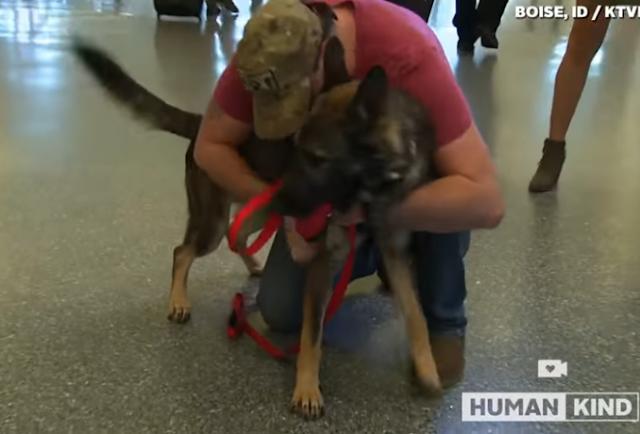 Soldado rescata su perro militar y cree que no lo recordará