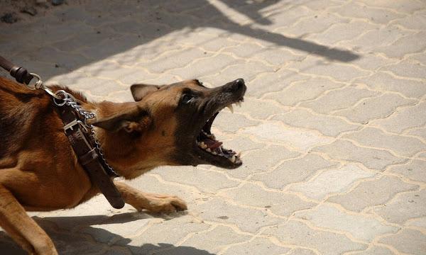 Τρόμος στον Διόνυσο: Αγέλη σκύλων επιτέθηκε και τραυμάτισε τέσσερα άτομα