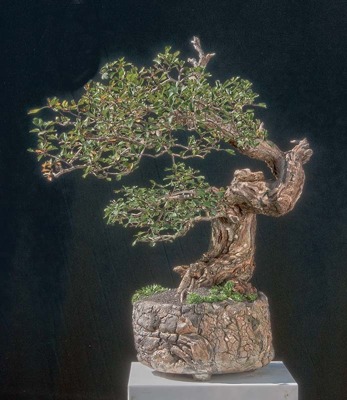 Walter Pall Bonsai Adventures September 2011