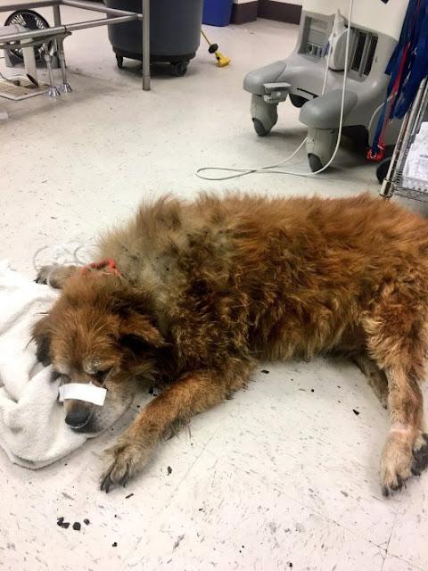 Bomberos encuentran un perro protegiendo a su dueña