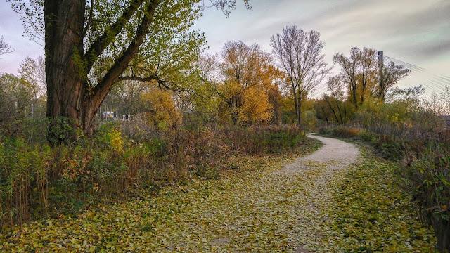Piękna okolica przy Wiśle