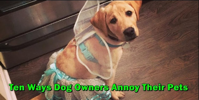 Ten Ways Pet Owners Annoy Our Dogs wildlifePlanet.net