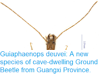 http://sciencythoughts.blogspot.co.uk/2017/04/guiaphaenops-deuvei-new-species-of-cave.html
