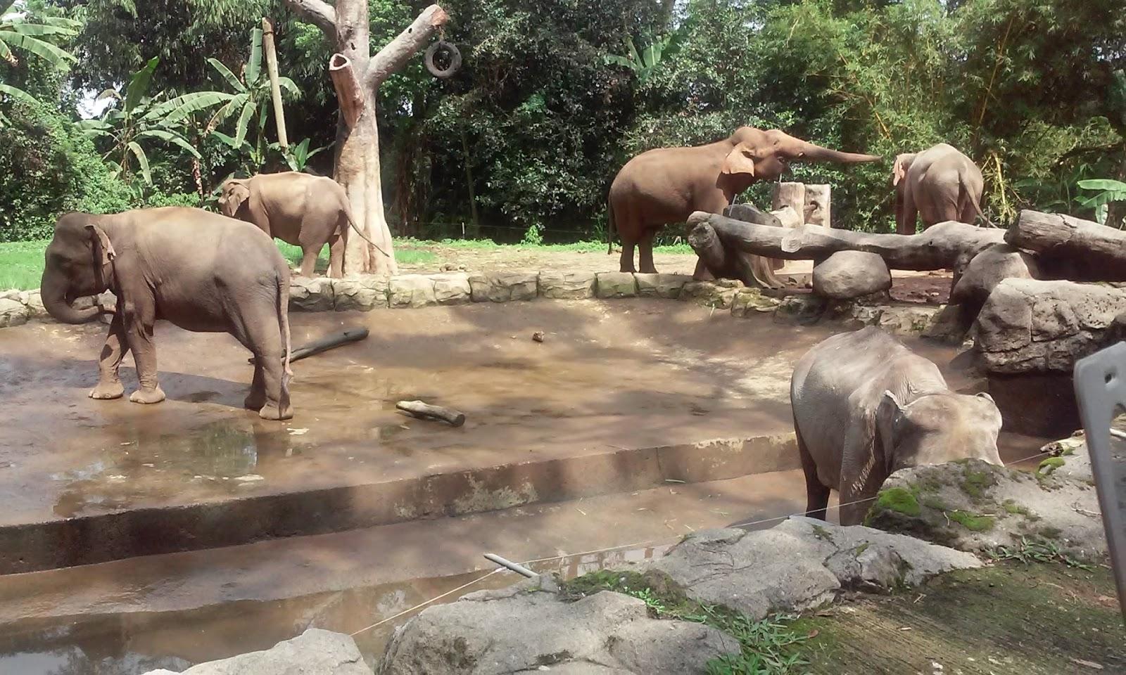 Shesyasu Ketika Di Taman Safari