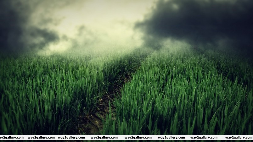 Green field fog wallpaper