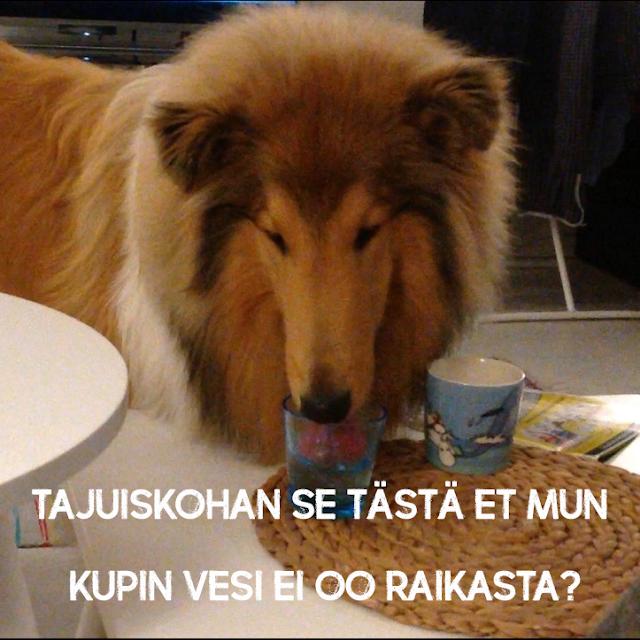 hölmö koira