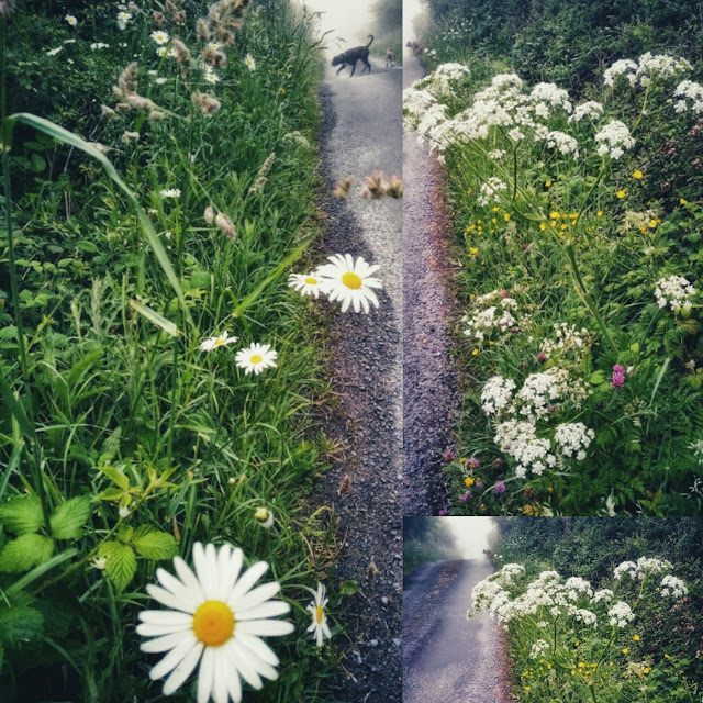 beautiful collage with flowers by the side of the road, very green