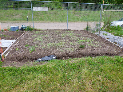 The Garlic Patch - Getting Started