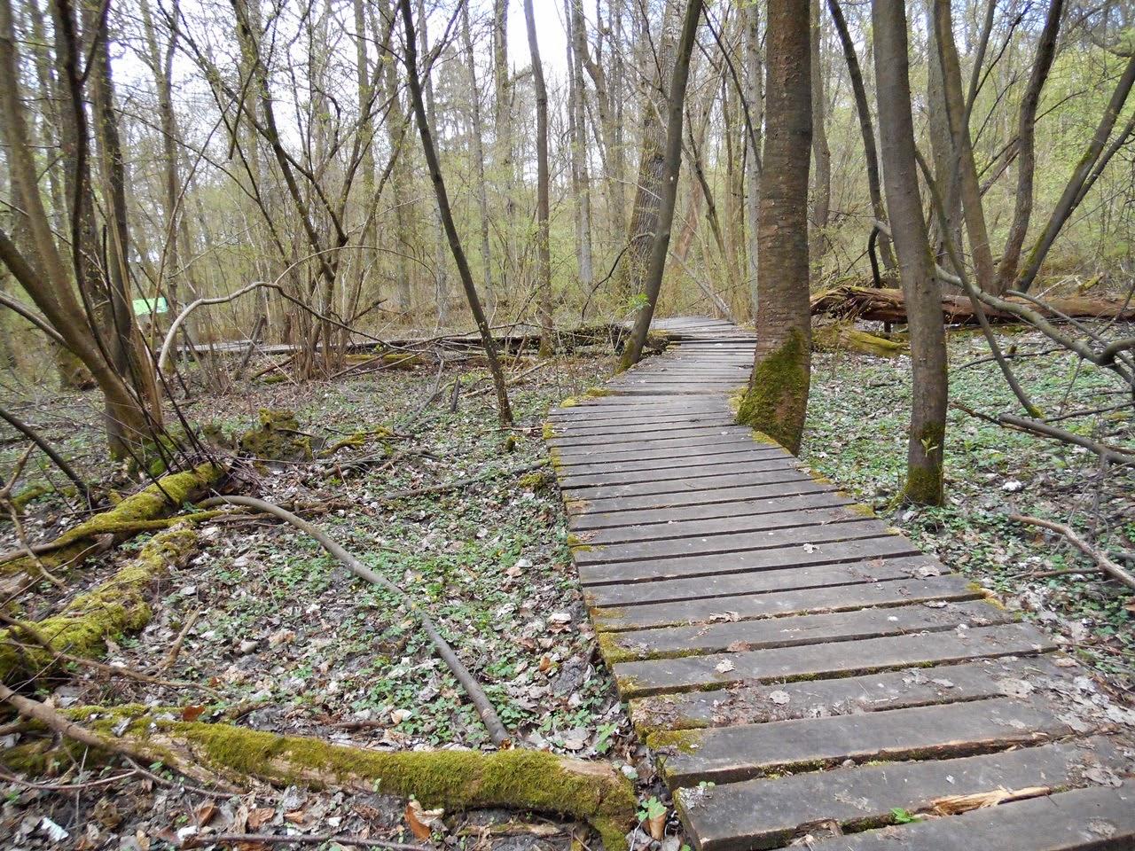drzewa, las, Poznań, ochrona przyrody