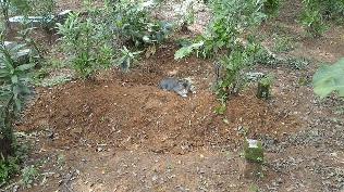 Kucing Ini Diam Setiap Hari Di Kuburan