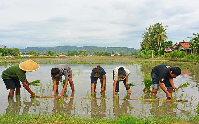 Nandur padi dulu bareng adek-adek warga setempat