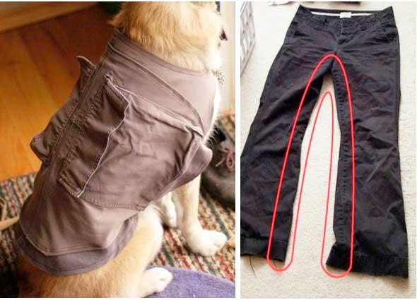 Chaquetas con bolsillos para mascotas con unos pantalones