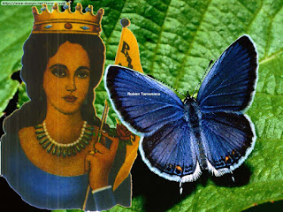 Transmigración, Maria Lionza, Mariposa Azul, Culto, Marialioncero