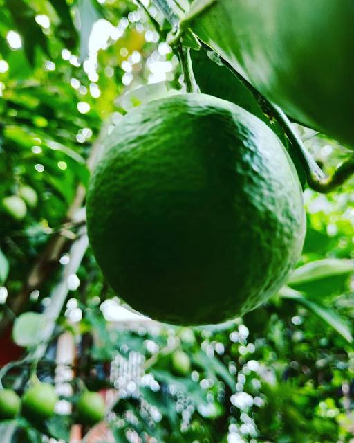 cara alami menghilangkan flek hitam di pipi dengan jeruk nipis